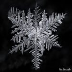 Snowflake by Don Komarechka