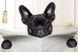 puppy_poo