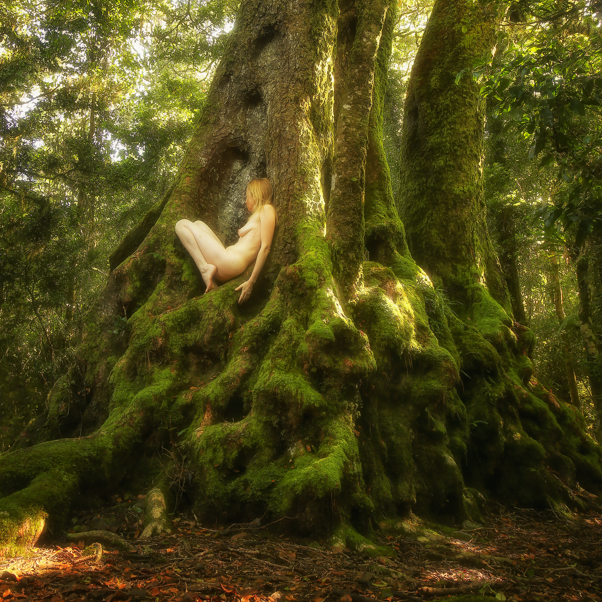 projects treegirl intimate encounters with wild nature book photography